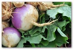 turnip-roots
