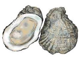 oyster sucked