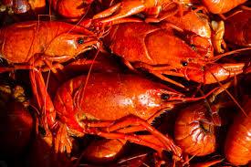 crawfish season